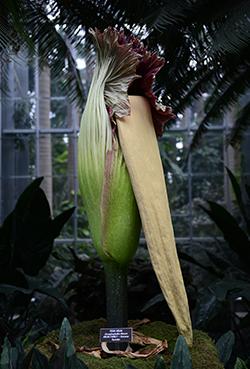 Photo Via: United States Botanical Gardens