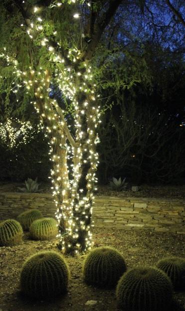 Luminarias At Desert Botanical Gardens Have Teacup Will Travel