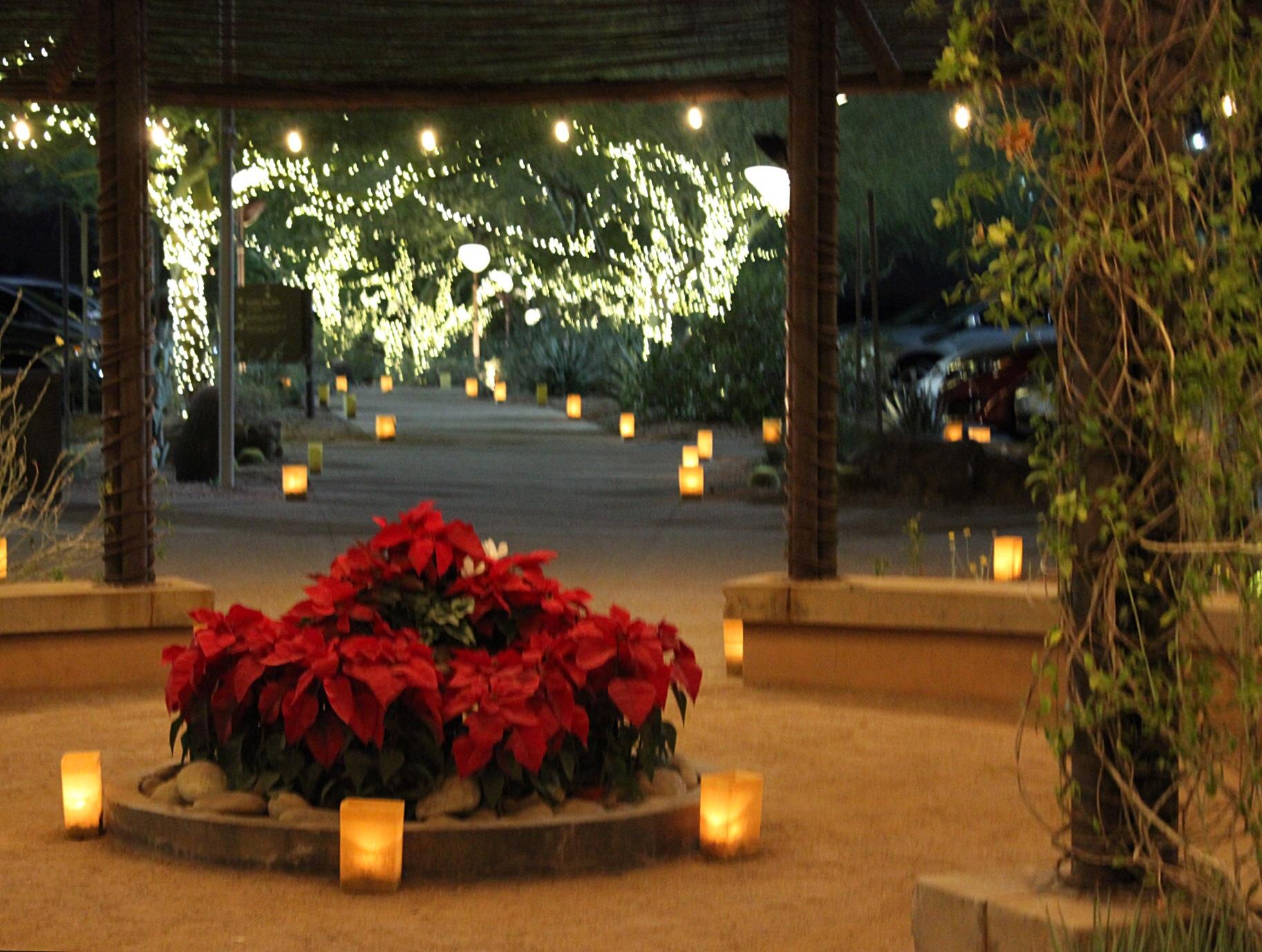 Luminarias at Desert Botanical Gardens – Have Teacup Will Travel